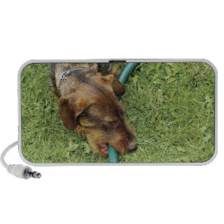Dog biting on hose on grass and Dandelion leaves Notebook Speakers
