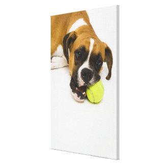 Dog biting tennis ball canvas print