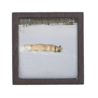 Dog burrowing in snow gift box
