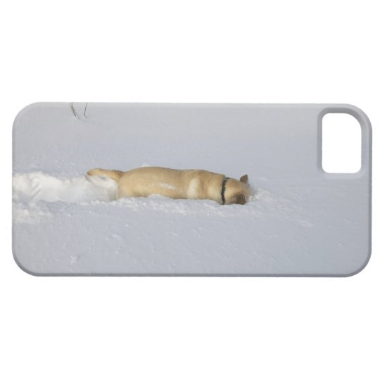 Dog burrowing in snow iPhone SE/5/5s case