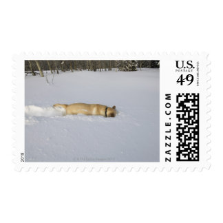 Dog burrowing in snow stamps