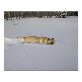 Dog burrowing in snow poster