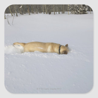Dog burrowing in snow square sticker