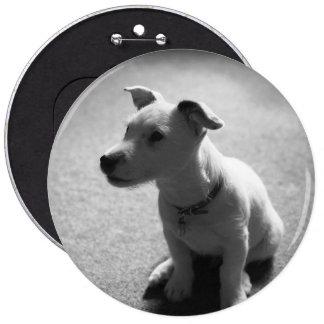 dog 6 inch round button