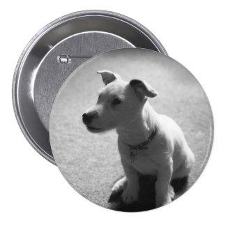 dog 3 inch round button