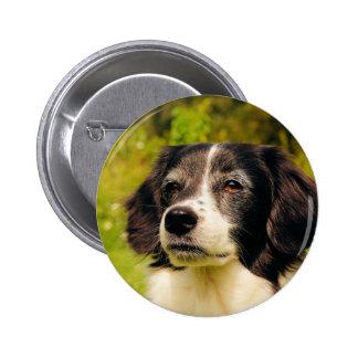 Dog Pinback Buttons