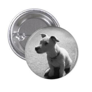 dog 1 inch round button