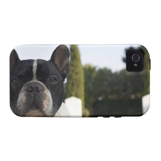 Dog by entrance iPhone 4/4S case