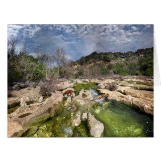 Dog Campbell's Hole Flats Barton Creek Austin Texa Card