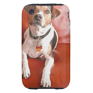 dog iPhone 3 tough covers