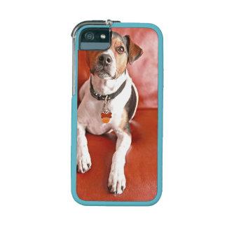 dog iPhone 5 case