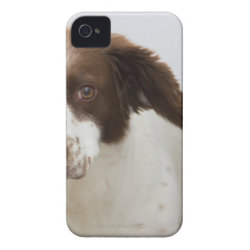 Case-Mate iPhone 4 Barely There Universal Case with Springer Spaniel Phone Cases design