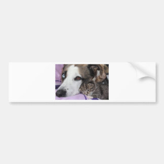 Dog, cat, friendship bumper sticker
