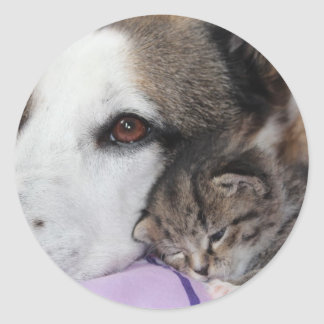 Dog, cat, friendship classic round sticker