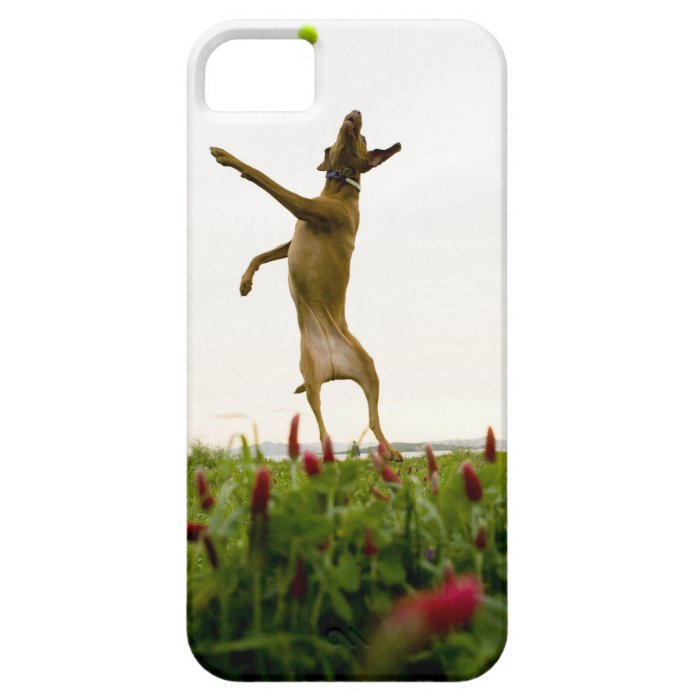 Dog catching tennis ball in mid-air iPhone SE/5/5s case