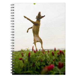 Dog catching tennis ball in mid-air notebook