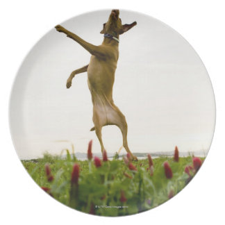 Dog catching tennis ball in mid-air party plates