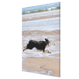 Dog chasing a ball at the beach canvas print