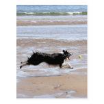 Dog chasing a ball at the beach postcard