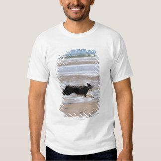 Dog chasing a ball at the beach t shirts