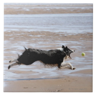 Dog chasing a ball at the beach tiles