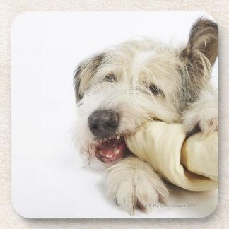 Dog Chewing on Rawhide Bone Drink Coaster