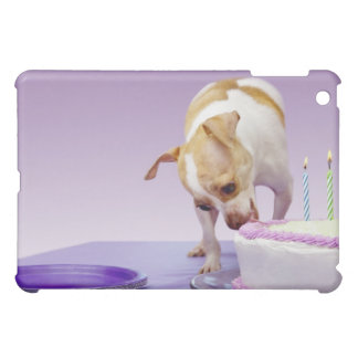 Dog (chihuahua) eating birthday cake on table cover for the iPad mini