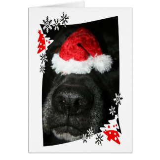 Dog Christmas hat on nose black lab mix canine Card