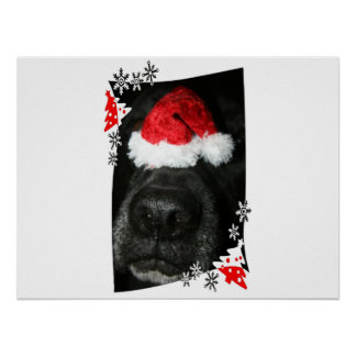 Dog Christmas hat on nose, black lab mix canine Posters