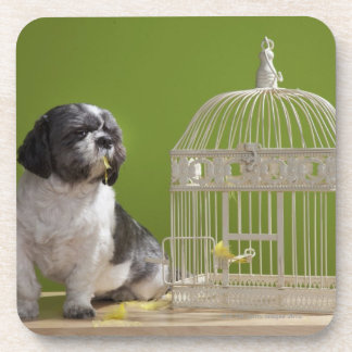 Dog close to a bird cage beverage coaster