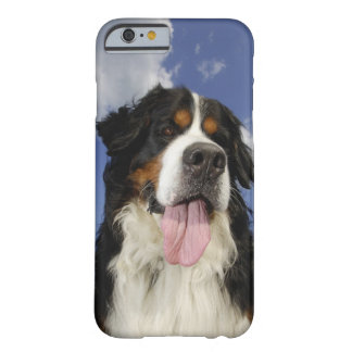 Dog, close-up barely there iPhone 6 case