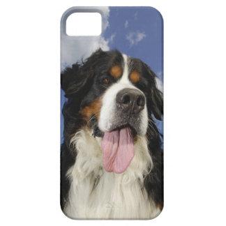 Dog, close-up iPhone SE/5/5s case