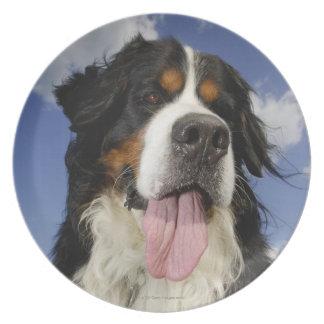Dog, close-up melamine plate