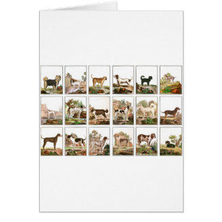 Dog Collection In Vintage Style Card