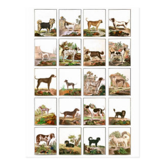 Dog Collection In Vintage Style Postcard