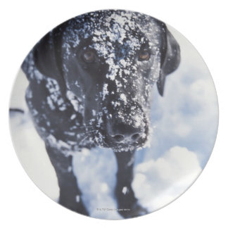 Dog covered in snow plate