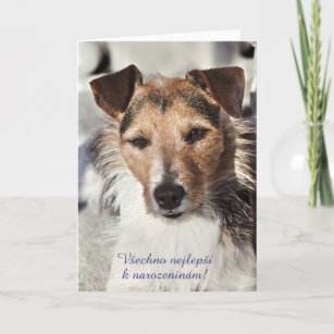 Czech birthday cards zazzle dog czech birthday card m4hsunfo