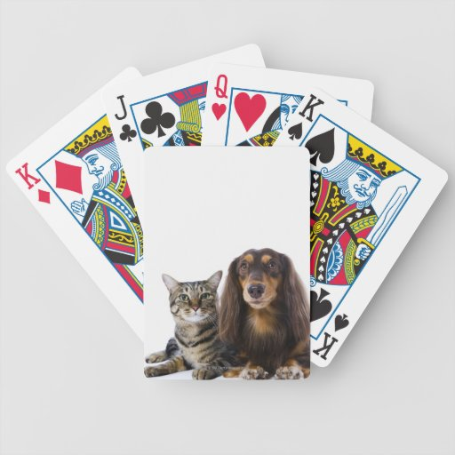Dog (Dachshund) and cat (Japanese cat) on white Poker Cards