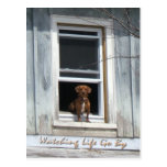 Dog Day Postscard Postcard
