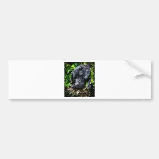 Dog days bumper sticker