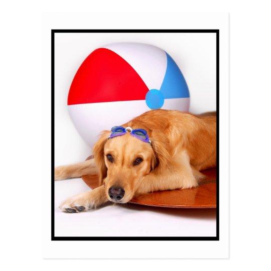 Dog Days of  Summer Golden Retriever Postcard