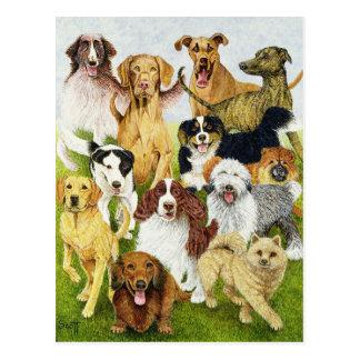 Dog Days Postcard