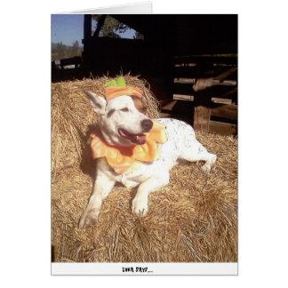 dog, dogs, fun, funny, Luna Says, Halloween, humor Card