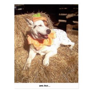 dog, dogs, fun, funny, Luna Says, Halloween, humor Postcard