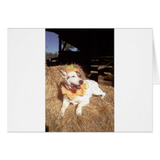 Dog, Dogs, funny, fun, humor, Luna Says, halloween Card