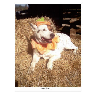 Dog, Dogs, funny, fun, humor, Luna Says, halloween Postcard