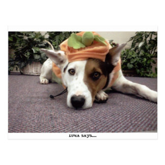 DOG,DOGS, HALLOWEEN, TRICK OR TREAT WITH LUNA POSTCARD