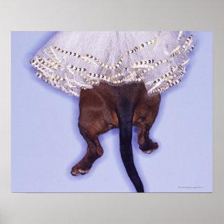 Dog dressed up poster