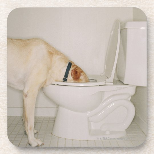 Dog drinking out of toilet beverage coaster