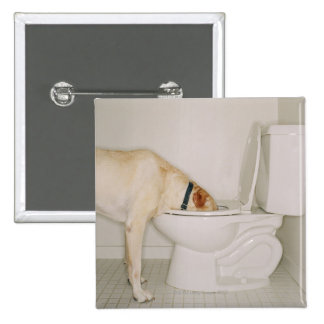 Dog drinking out of toilet button